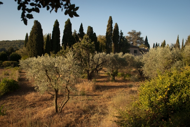provencal countryside-1